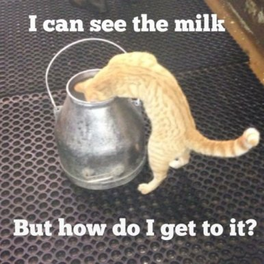 fred milk