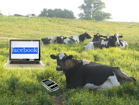 Cows Stole My Internet Farmer Bright