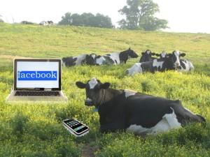 socialmediacow